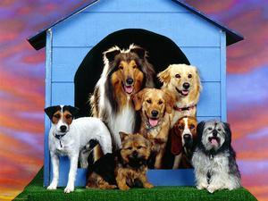 Cuidamos Mascotas. Guarderia Animal.