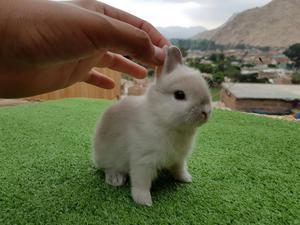 Busco conejito blanco posot class - Casas para conejos enanos ...