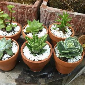 Terrarios cactus crasas macetas plantas posot class for Cactus y suculentas
