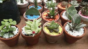 Recuerdos cactus y suculentas x mayor matrimonios posot for Suculentas por mayor
