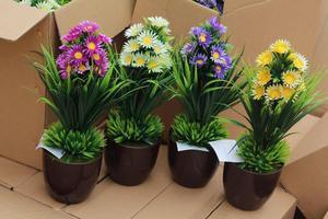 Hermosos bonsay para la decoración de su hogar, oficina o