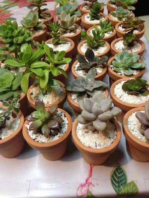 Recuerdos De Bautizo Con Cactus.Cactus Y Suculentas Recuerdos Bautizos 2 Soles Posot Class