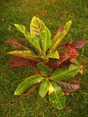 Vivero de plantas ornamentales fundo arequipa posot class for Plantas ornamentales de interior