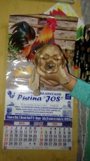 Lindos Cachorros