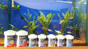 Alimento Completo Para Peces Tropicales Nutrafin Posot Class