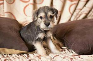 Guardería Para Mascotas Hospedaje Por Día