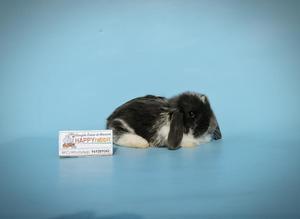 Conejos de Mascota Happy Rabbit