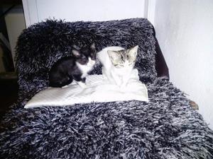 Hermosos Gatitos en Busca de Un Nuevo Ho