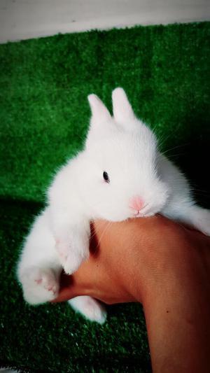 Los. Más Bellos Conejos Conejitos Enanos