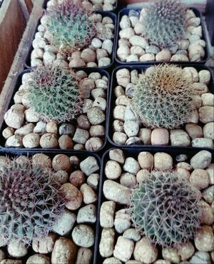Macetas para plantas nuevas posot class for Plantas decorativas