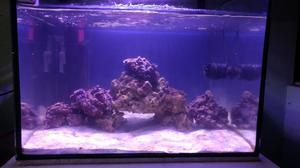 Grava marina o conchuelo y roca viva posot class for Acuario marino precio