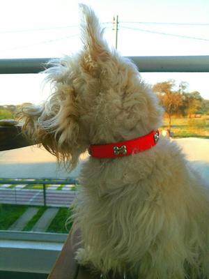 Collares con nombre posot class for Collares para perros