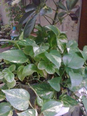 decoracion plantas ornamentales lima callao posot class