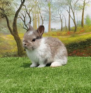 Conejos de Mascota Happy Rabbit Perú
