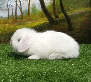 Conejos Conejitos de Mascota Lima