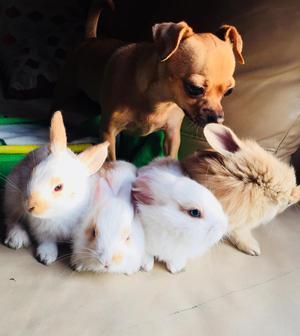 Venta de Conejos Enanos