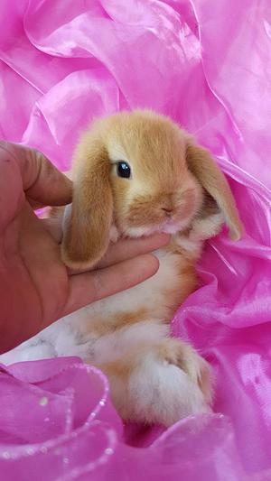 Conejos Conejitos Enanos Mascotas Depa
