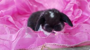 Conejos Conejitos Mascotas Enanos Depa
