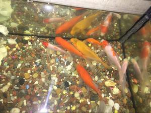 Pecera con peces y salamandra posot class for Peceras con peces