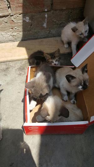 Adoptame Soy Un Gatito con Mucho Amor