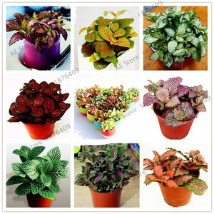 Curso reparaciones florales y frutales posot class for 20 plantas ornamentales