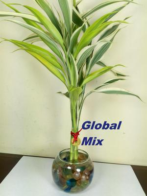 Decoracion plantas ornamentales lima callao posot class for Viveros ornamentales definicion