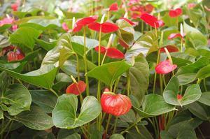 Decoracion plantas ornamentales lima callao posot class for Diseno de plantas ornamentales