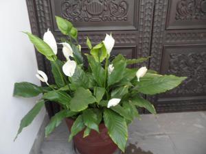 Compro plantas de pecano injerto variedad posot class for Vendo plantas ornamentales