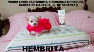 Vendo Linda Cachorrita Chihuahua Mini, Cabeza De Manzana