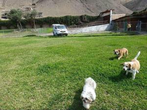 Alquilo Terreno para Mascotas