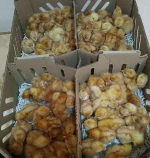 vendemos pollos a domicilio llama casero