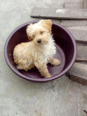 Donacion de Perrito