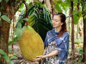 Semillas Germinadas Planta Frutal Jack Fruit, Fruta Gigante