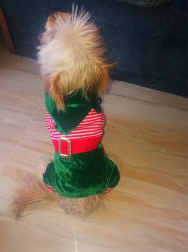Ropa De Perro Navidad Duende Ropa De Mascotas