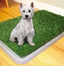Baño Grande Para Perros, Mascotas Medianas