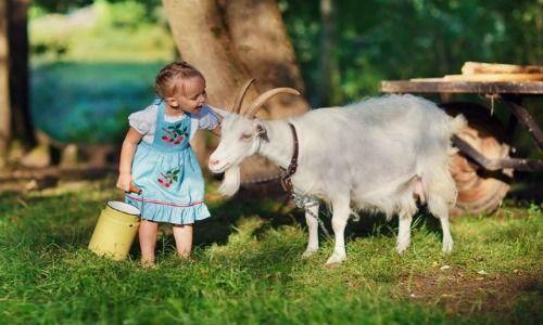 Leche de cabra, imprescindible para la salud y belleza