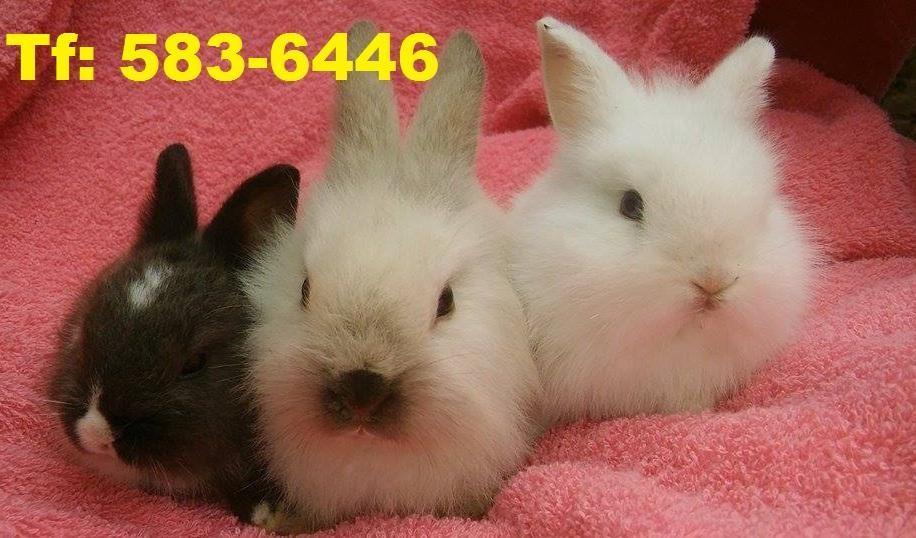 Conejos grandes y chicos unidad y x MAYOR