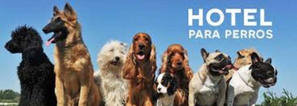 Hospedaje para Mascotas Monterrico Surco