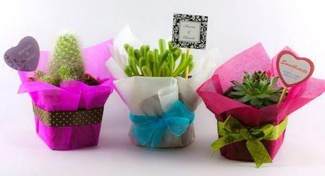 Recuerdos De Bautizo Con Cactus.Plantas Mini Plantitas Recuerdos Posot Class