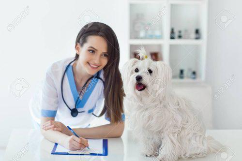 Software De Administración Para Clínica Veterinaria