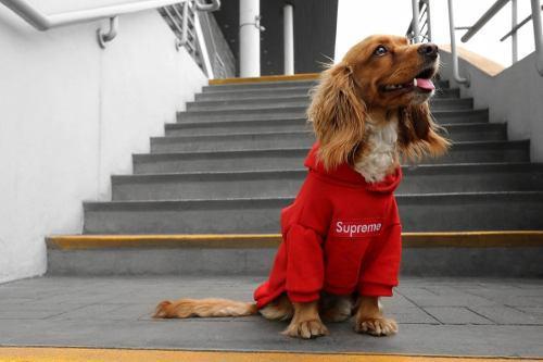 Ropa Para Perros Supreme