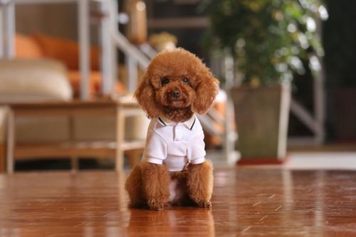 Camiseta Blanca Sport Elegante Para Perros