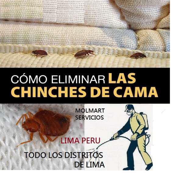 Fumigaciones de casas en lima norte 999 954 896 en Lima