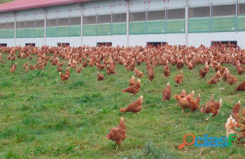 Aves, porcinos, ganadería, mascotas: Experto Asesor en